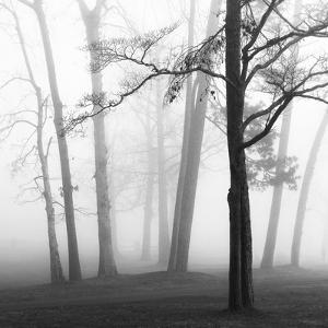 Ethereal Trees by Nicholas Bell