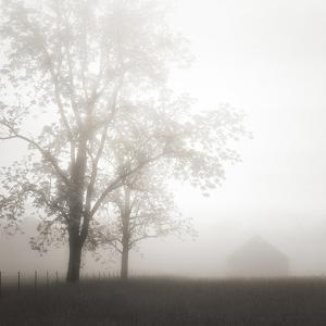 Farmland, Appalachia, 2013 by Nicholas Bell