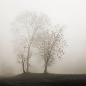 Four Trees in Fog by Nicholas Bell
