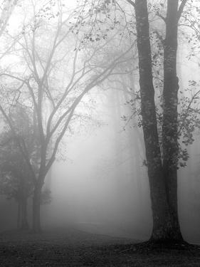 November Fog by Nicholas Bell