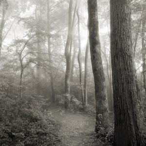 Woodland Path by Nicholas Bell Photography