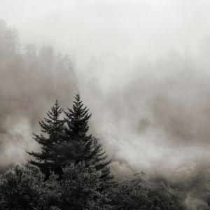 Rising Mist, Smoky Mountains by Nicholas Bell