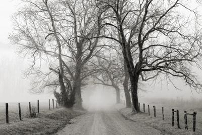 Sparks Lane, Late Autumn by Nicholas Bell