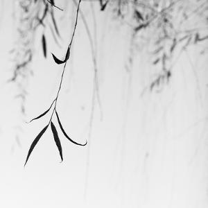 Willow Print No. 1 by Nicholas Bell