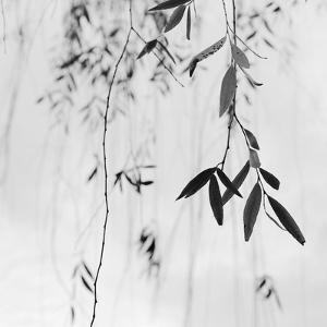 Willow Print No. 3 by Nicholas Bell