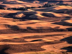 Aerial View of Wheat Field in Palouse Region, Palouse, USA by Nicholas Pavloff