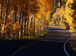 Aspens in Autumn on Road Around June Lake Loop, Eastern Sierra Nevada, June Lake, USA by Nicholas Pavloff
