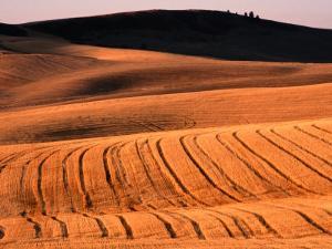 Harvested Wheat Fields, Palouse Region, Palouse, USA by Nicholas Pavloff