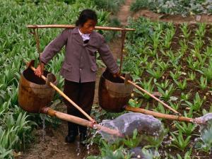 Woman Irrigating Crops, Guilin, China by Nicholas Pavloff