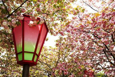 Japan Mint Cherry Blossom Season by NicholasHan