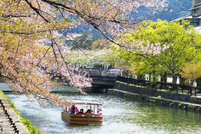 Japan's Heian Shrine Cherry by NicholasHan