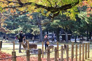 Nara is a Major Tourism Destination by NicholasHan