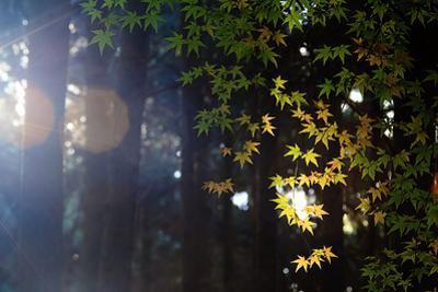 The Fall Season of Japan by NicholasHan