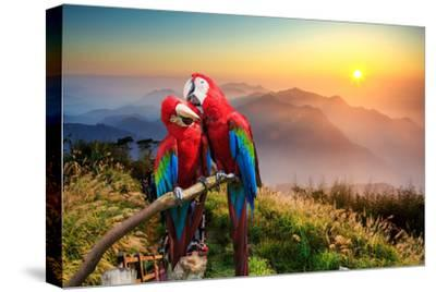 The Potrait of Blue & Gold Macaw by NicholasHan
