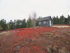 A Blueberry Field with a Tiny House Along Maines Route One by Nick Caloyianis