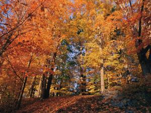 A Deciduous Forest Shows off its Fall Colors by Nick Caloyianis