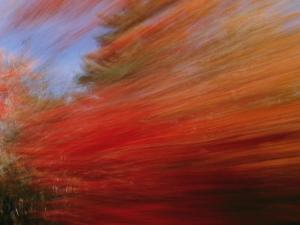 A Panned View of a Deciduous Forest in Fall Colors by Nick Caloyianis