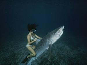 A Woman Rides a Shark by Nick Caloyianis