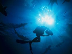Sunlight Silhouetting a Diver Swimming About with a Group of Sharks by Nick Caloyianis