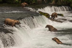 Five Bears Salmon Fishing at Brooks Falls by Nick Dale