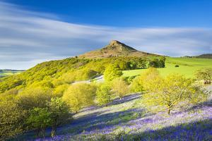 United Kingdom, England, North Yorkshire, Great Ayton. Spring Bluebells at Roseberry Topping. by Nick Ledger