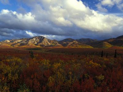 Denali Natioanl Park in Fall Colors by Nick Norman