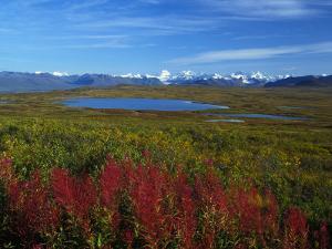 Fall Colors in an Alaskan Field, Alaska by Nick Norman