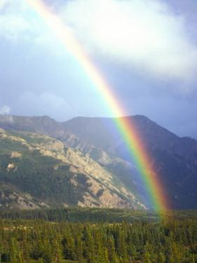 Rainbow over Forest, Alaska by Nick Norman