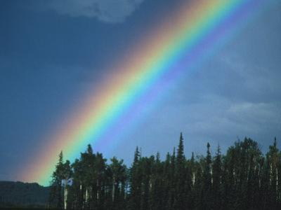 Rainbow over Forest, British Columbia, Canada by Nick Norman