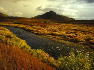 River Flows Through a Field in Autumn Color, Tombstone Territorial Park, Yukon Territory, Canada by Nick Norman