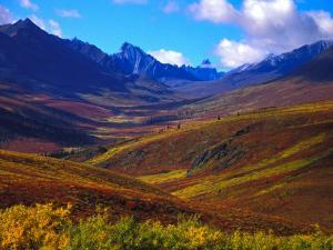 Valley Blooms with Autumn Colors, Tombstone Territorial Park, Yukon Territory, Canada by Nick Norman