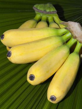 Banana Bunch (Musa Acuminata, Musa Balbisiana), Phuket, Thailand by Nico Tondini