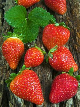 Strawberries (Fragaria Vesca) on a Tree Bark, Garden Strawberry by Nico Tondini
