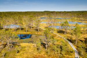 Viru Bog (Viru Raba) Peat Swamp, Lahemaa National Park, Harjumaa by Nico Tondini