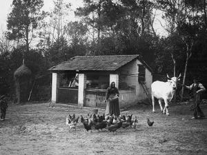 Farmers with a Cow and Hens by Nicola Biondi
