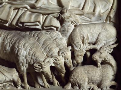 Flock of Rams