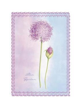 Allium Giganteum by Nicola Rabbett