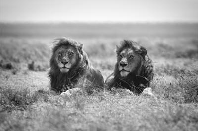 Two Kings by Nicolas Merino