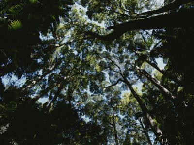View Looking up into the Forest Canopy by Nicole Duplaix