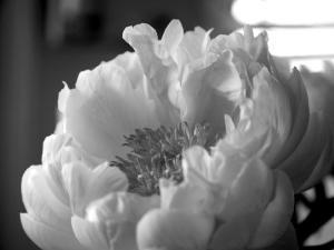 Delicate Blossoms IV by Nicole Katano
