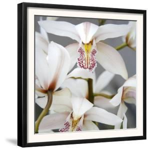Orchid Closeup I by Nicole Katano