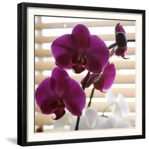Purple Orchids I by Nicole Katano