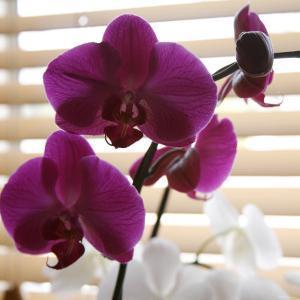 Purple Orchids I by Nicole Katano