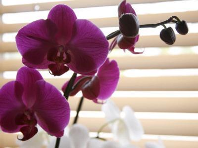 Purple Orchids II by Nicole Katano