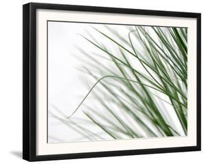 Reeds by Nicole Katano