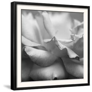 Rose Petals II by Nicole Katano