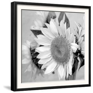 Sunny Sunflower II by Nicole Katano