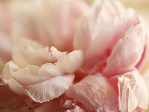 Sweet Flower I by Nicole Katano