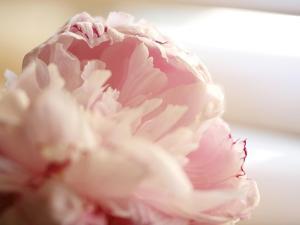 Sweet Flower II by Nicole Katano