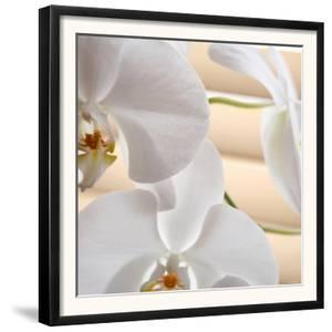 White Orchids I by Nicole Katano